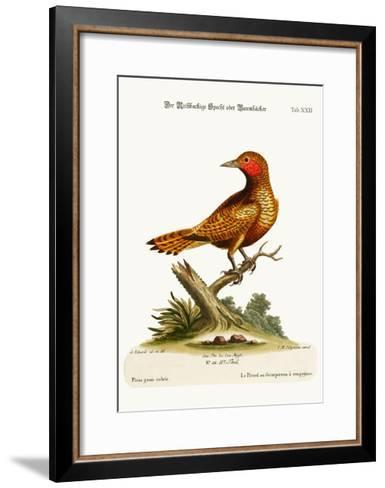 The Red-Cheeked Woodpecker, 1749-73-George Edwards-Framed Art Print