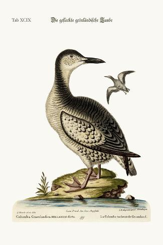 The Spotted Greenland Dove, 1749-73-George Edwards-Stretched Canvas Print