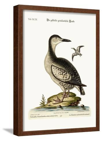 The Spotted Greenland Dove, 1749-73-George Edwards-Framed Art Print