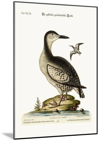 The Spotted Greenland Dove, 1749-73-George Edwards-Mounted Giclee Print