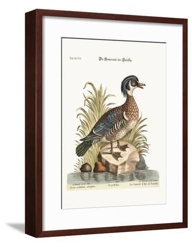 The Summer Duck of Catesby, 1749-73-George Edwards-Framed Art Print