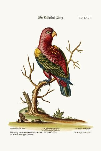 The Scarlet Lory, 1749-73-George Edwards-Stretched Canvas Print