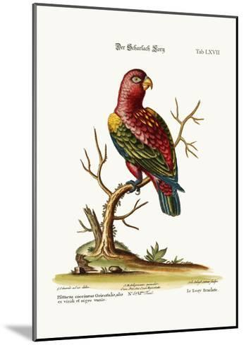 The Scarlet Lory, 1749-73-George Edwards-Mounted Giclee Print