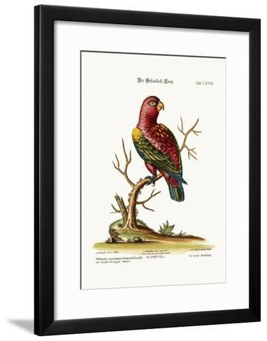The Scarlet Lory, 1749-73-George Edwards-Framed Art Print