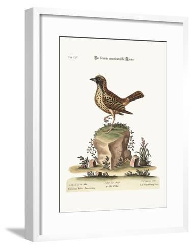 The Schomburger, 1749-73-George Edwards-Framed Art Print