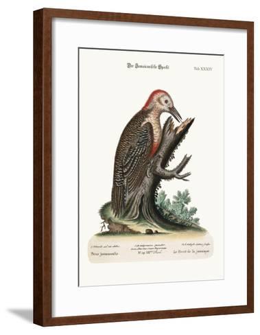 The Wood-Pecker of Jamaica, 1749-73-George Edwards-Framed Art Print