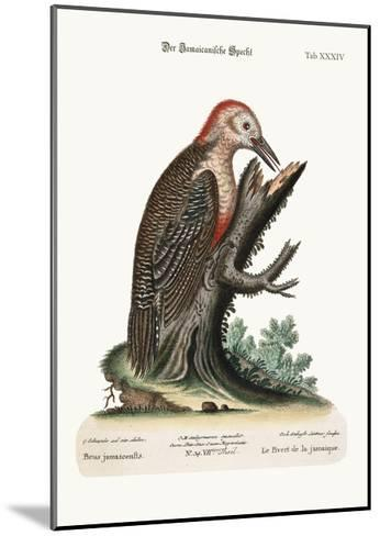 The Wood-Pecker of Jamaica, 1749-73-George Edwards-Mounted Giclee Print