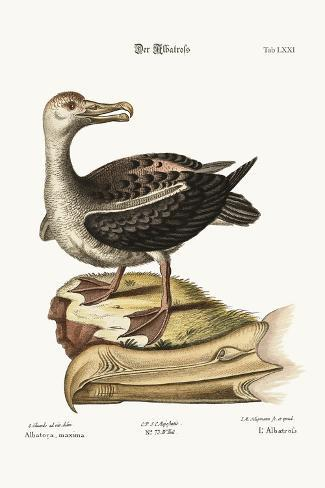 The Albatross, 1749-73-George Edwards-Stretched Canvas Print