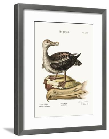 The Albatross, 1749-73-George Edwards-Framed Art Print