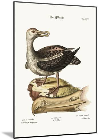 The Albatross, 1749-73-George Edwards-Mounted Giclee Print