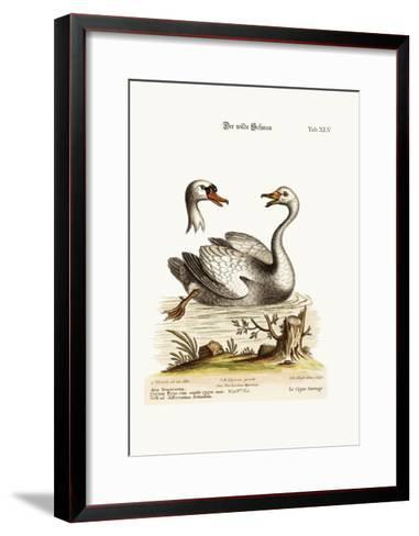 The Wild Swan, 1749-73-George Edwards-Framed Art Print