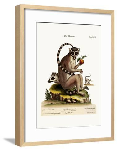 The Maucauco, 1749-73-George Edwards-Framed Art Print