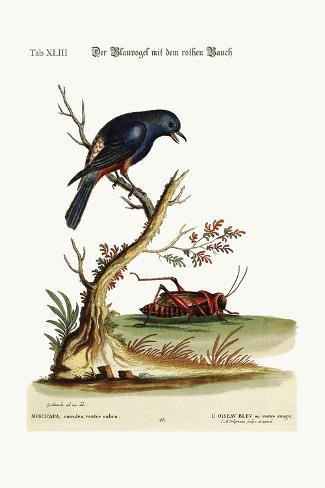The Red-Bellied Blue-Bird, 1749-73-George Edwards-Stretched Canvas Print