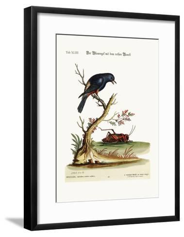 The Red-Bellied Blue-Bird, 1749-73-George Edwards-Framed Art Print