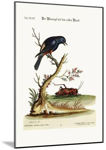 The Red-Bellied Blue-Bird, 1749-73-George Edwards-Mounted Giclee Print