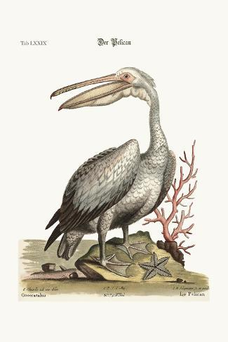 The Pelican, 1749-73-George Edwards-Stretched Canvas Print