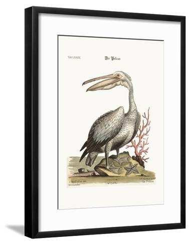 The Pelican, 1749-73-George Edwards-Framed Art Print