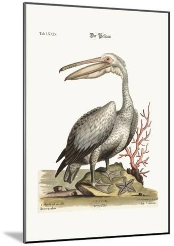 The Pelican, 1749-73-George Edwards-Mounted Giclee Print
