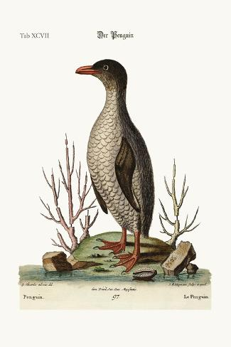 The Penguin, 1749-73-George Edwards-Stretched Canvas Print