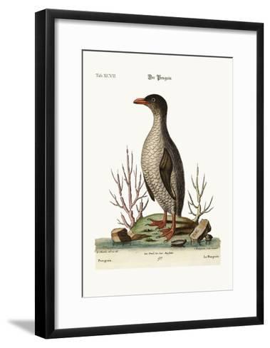 The Penguin, 1749-73-George Edwards-Framed Art Print