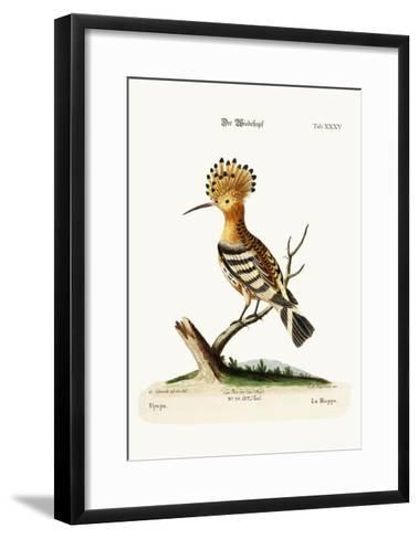 The Hoopoe, 1749-73-George Edwards-Framed Art Print