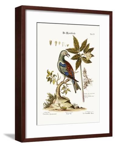 The Roller, 1749-73-George Edwards-Framed Art Print