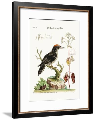 The Three-Toed Woodpecker, 1749-73-George Edwards-Framed Art Print
