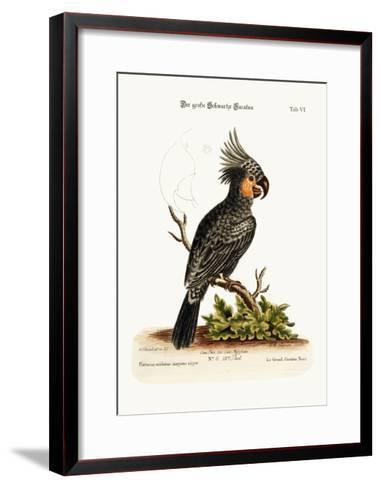 The Great Black Cockatoo, 1749-73-George Edwards-Framed Art Print