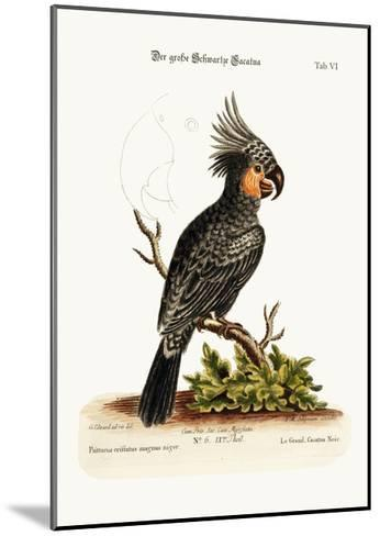The Great Black Cockatoo, 1749-73-George Edwards-Mounted Giclee Print