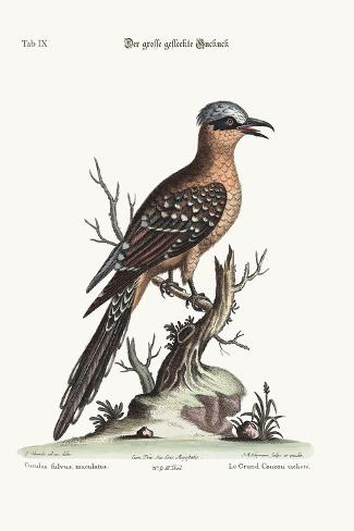 The Great Spotted Cuckow, 1749-73-George Edwards-Stretched Canvas Print