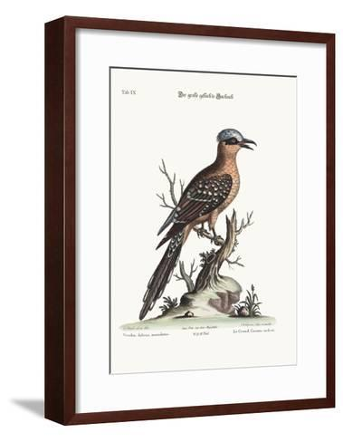 The Great Spotted Cuckow, 1749-73-George Edwards-Framed Art Print