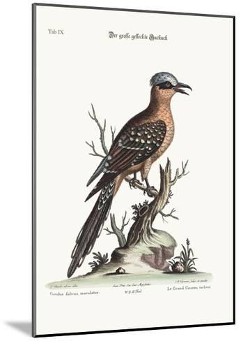 The Great Spotted Cuckow, 1749-73-George Edwards-Mounted Giclee Print