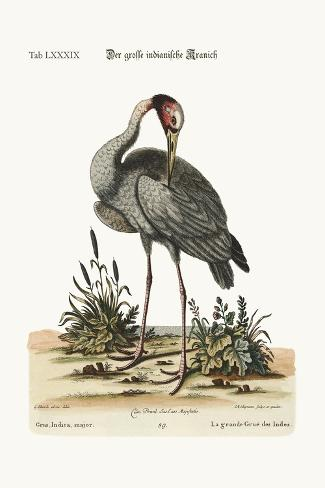 The Greater Indian Crane, 1749-73-George Edwards-Stretched Canvas Print