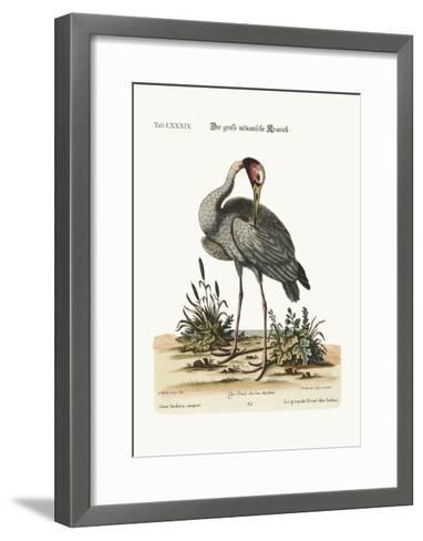 The Greater Indian Crane, 1749-73-George Edwards-Framed Art Print