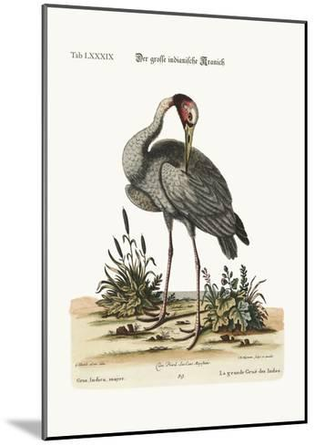 The Greater Indian Crane, 1749-73-George Edwards-Mounted Giclee Print