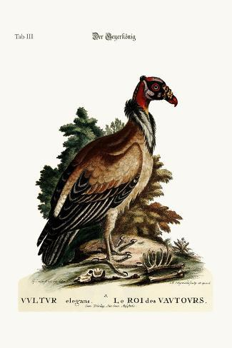 The King of the Vultures, 1749-73-George Edwards-Stretched Canvas Print