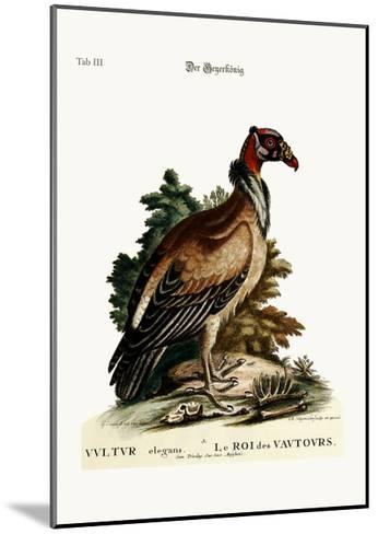 The King of the Vultures, 1749-73-George Edwards-Mounted Giclee Print