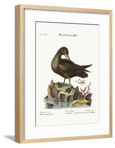 The Great Black Peteril, 1749-73-George Edwards-Framed Art Print