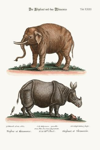 The Elephant and the Rhinoceros, 1749-73-George Edwards-Stretched Canvas Print