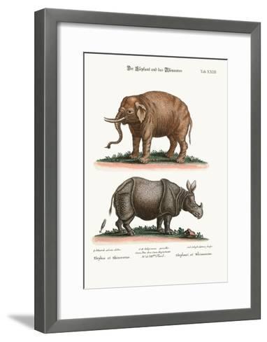 The Elephant and the Rhinoceros, 1749-73-George Edwards-Framed Art Print