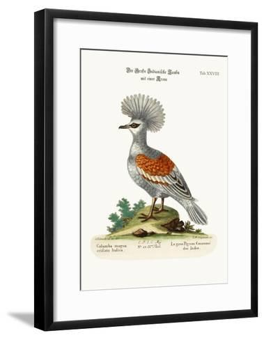 The Great Crowned Indian Pigeon, 1749-73-George Edwards-Framed Art Print