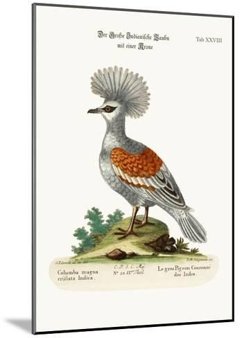 The Great Crowned Indian Pigeon, 1749-73-George Edwards-Mounted Giclee Print