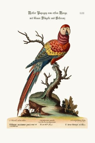 The Red and Blue Maccaw, 1749-73-George Edwards-Stretched Canvas Print