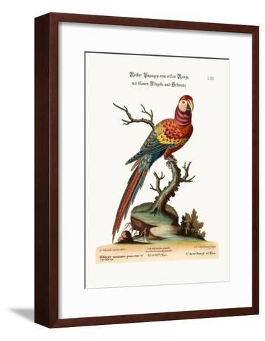 The Red and Blue Maccaw, 1749-73-George Edwards-Framed Art Print