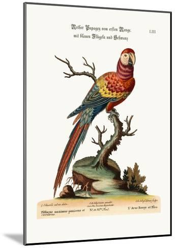 The Red and Blue Maccaw, 1749-73-George Edwards-Mounted Giclee Print