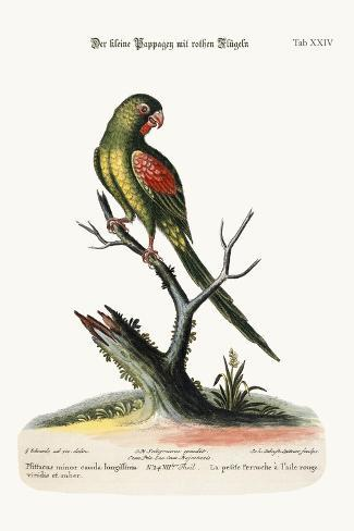 The Little Red-Winged Parrakeet, 1749-73-George Edwards-Stretched Canvas Print