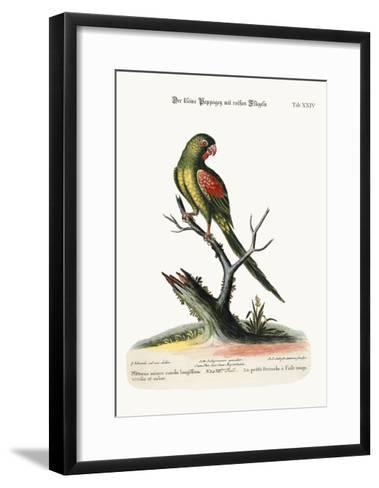The Little Red-Winged Parrakeet, 1749-73-George Edwards-Framed Art Print