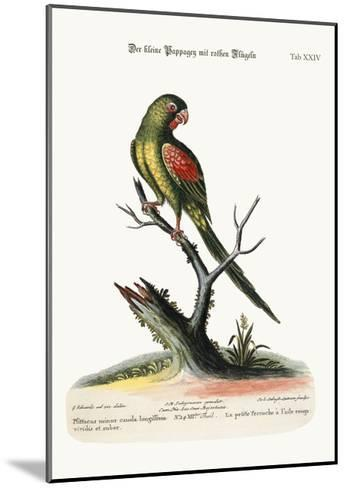The Little Red-Winged Parrakeet, 1749-73-George Edwards-Mounted Giclee Print