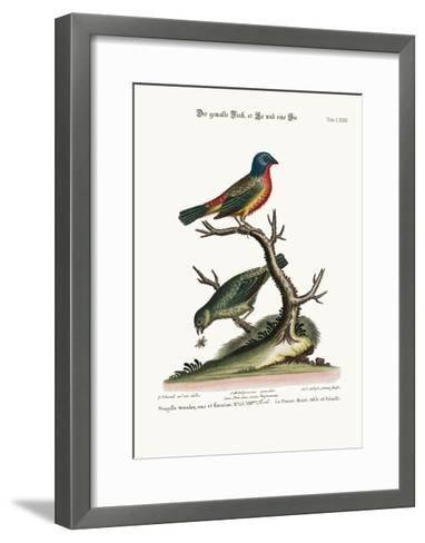 The Painted Finch, Cock and Hen, 1749-73-George Edwards-Framed Art Print