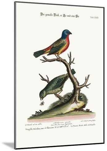 The Painted Finch, Cock and Hen, 1749-73-George Edwards-Mounted Giclee Print